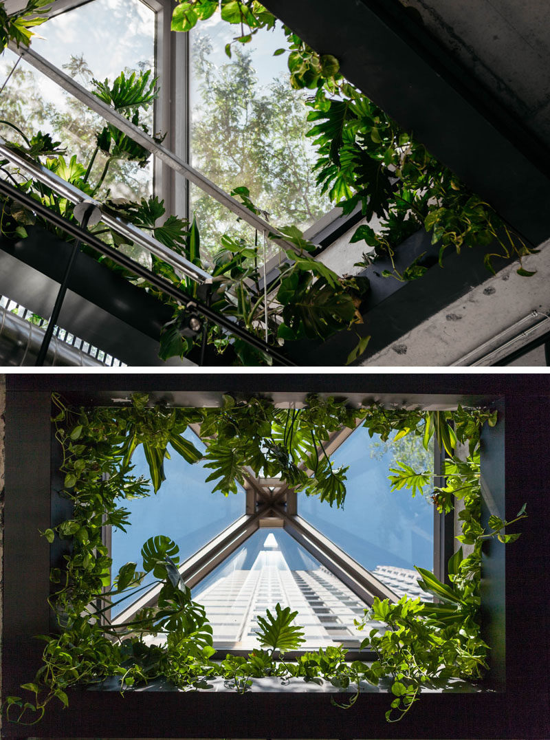 This modern sushi restaurant has a skylight that the designers surrounded by plants. #Skylight #InteriorDesign #Window #Plants